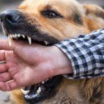 Dog Bite Cases