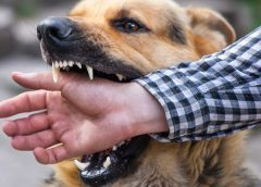 Liability In Dog Bite Cases